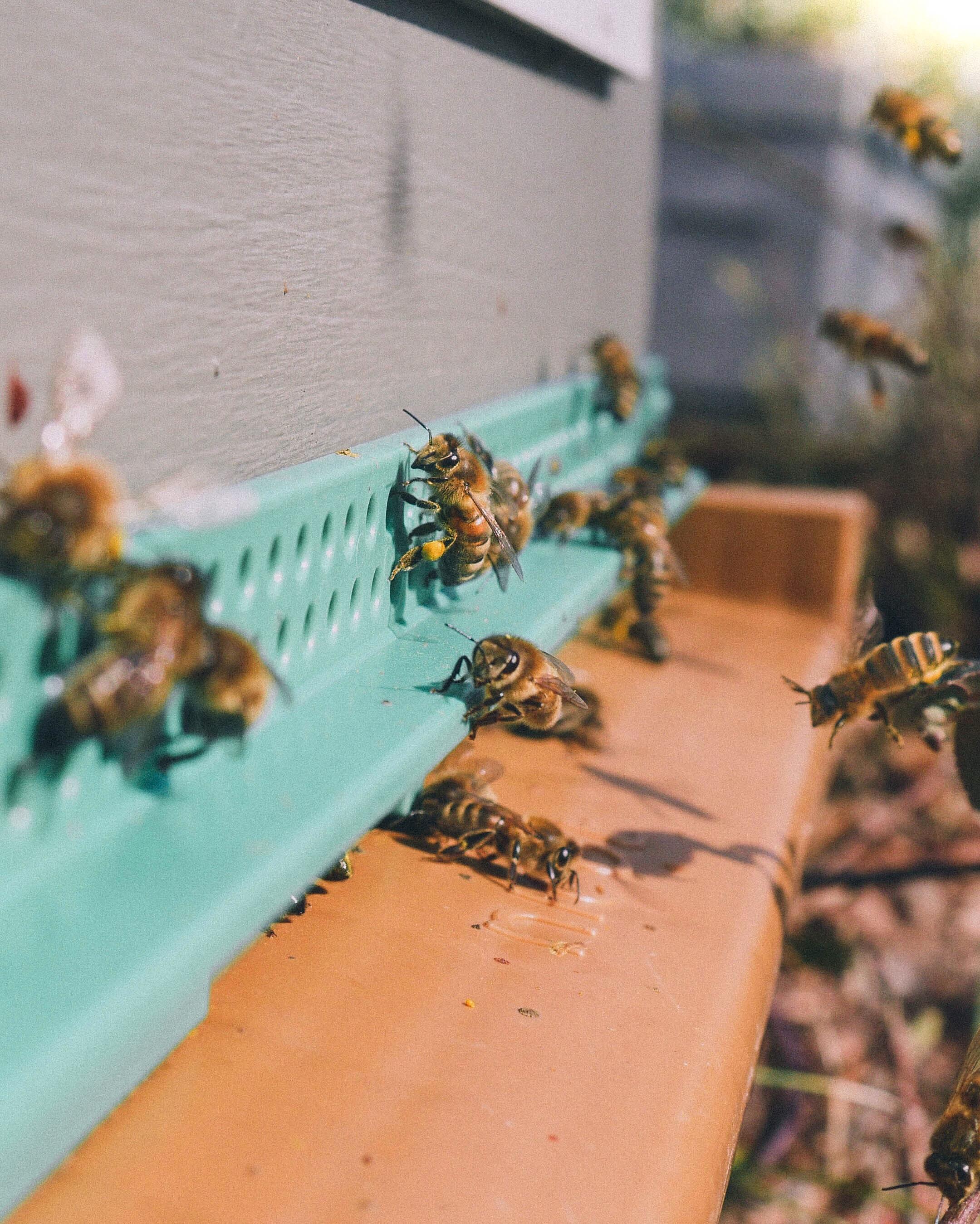 miel de qualité